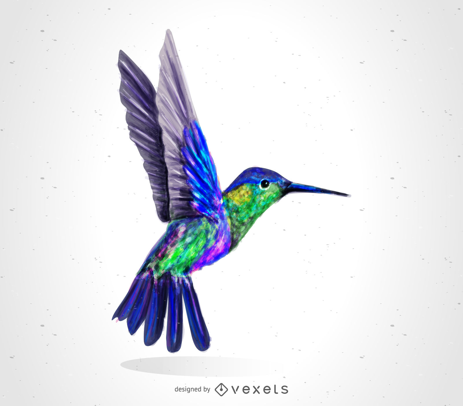 1600x1401 Hummingbird Bird Drawing