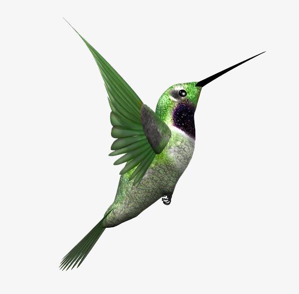 600x590 Jamaican Drawing Hummingbird Transparent Png Clipart Free