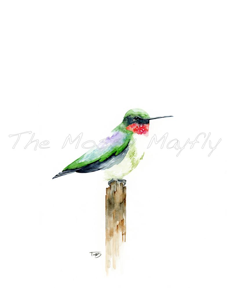 794x993 ruby throated hummingbird watercolor print etsy