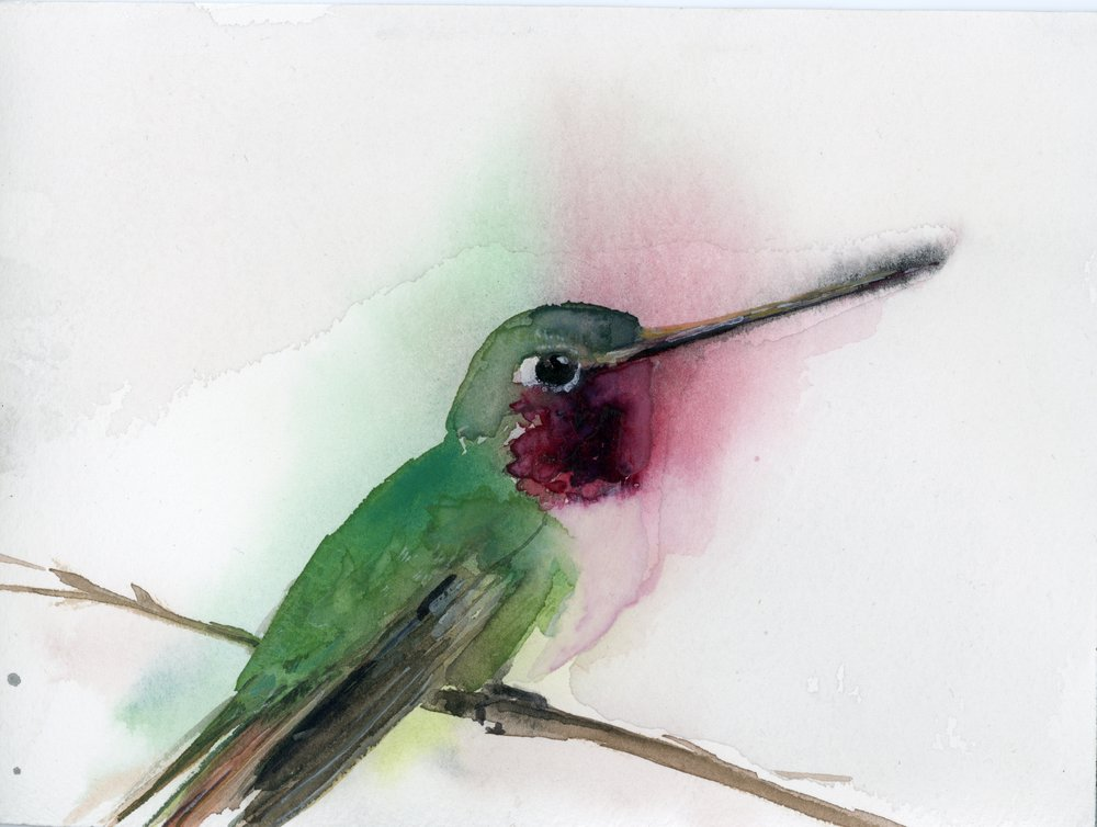 1000x754 ruby throated hummingbird holly wach