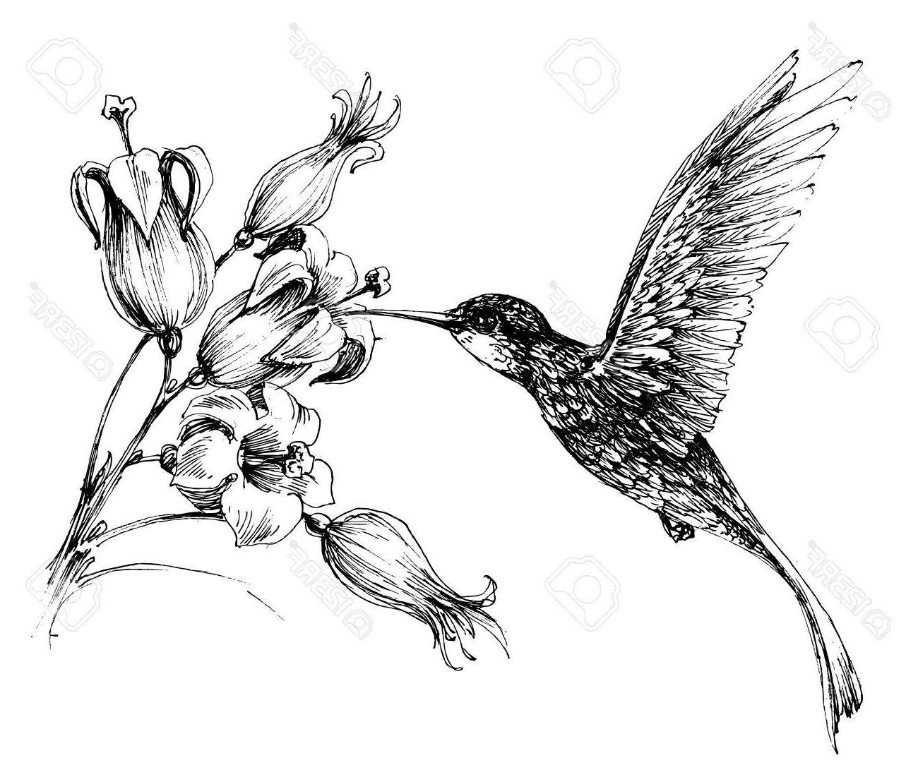 1300x1101 Top Hummingbird Drawings Vector Pictures Free Vector Art, Images