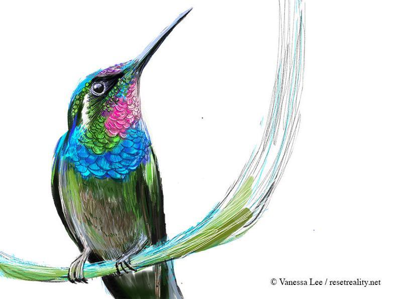 794x595 Brazilian Ruby Hummingbird Print Wildlife Illustration Cute Etsy