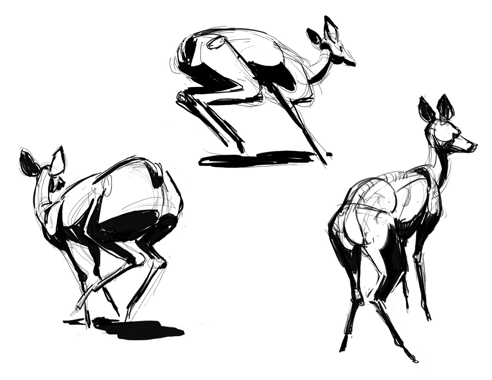 Running Deer Drawing
