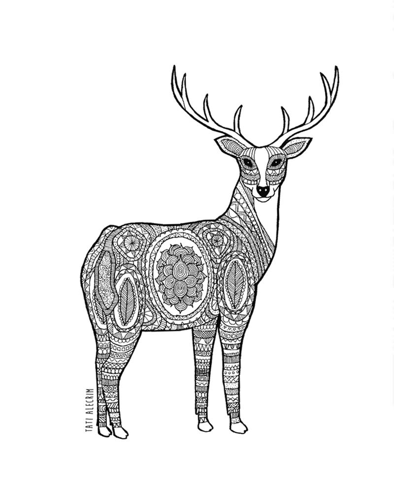 800x1000 Deer Drawing Free Download