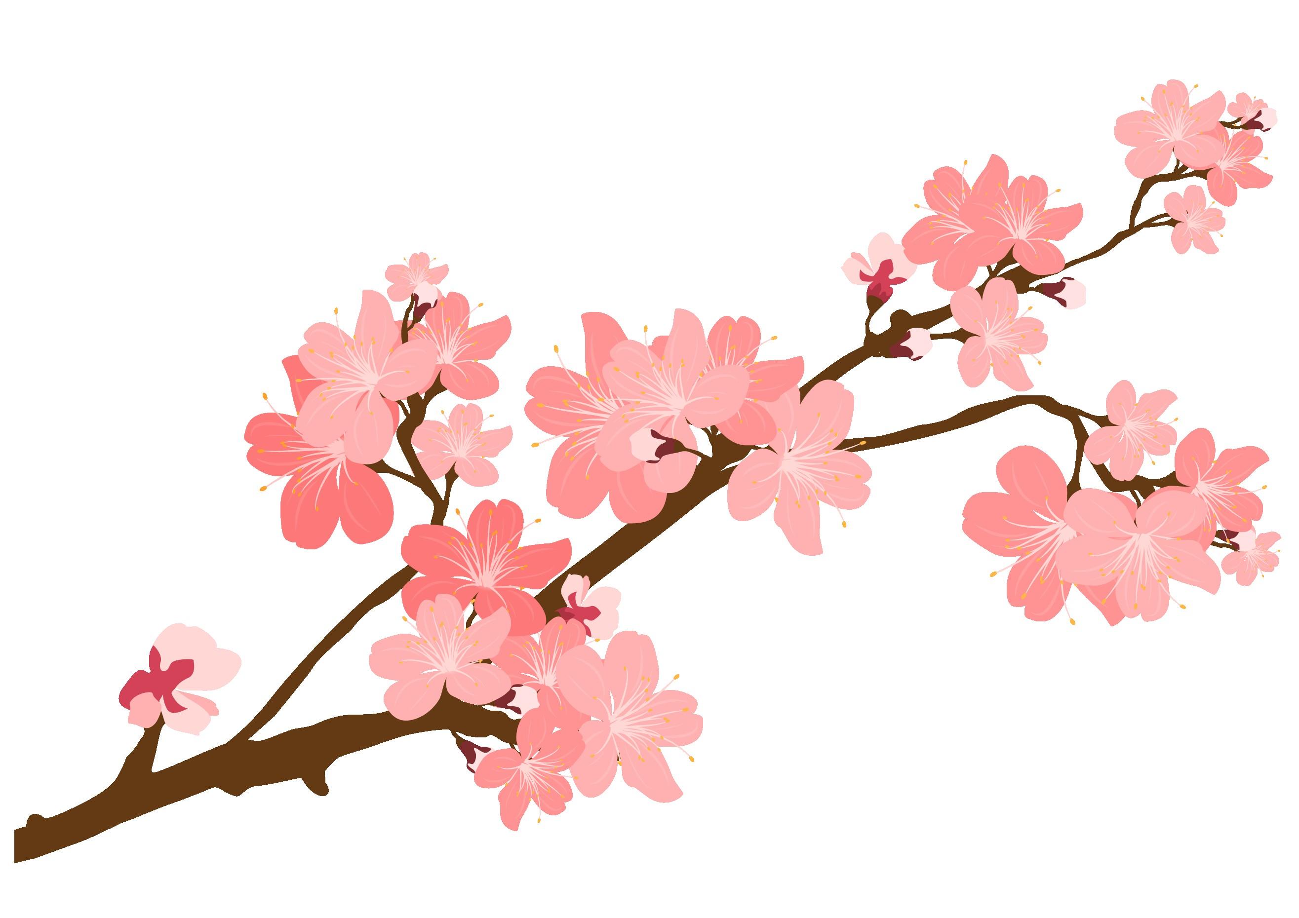 Sakura Branch Drawing