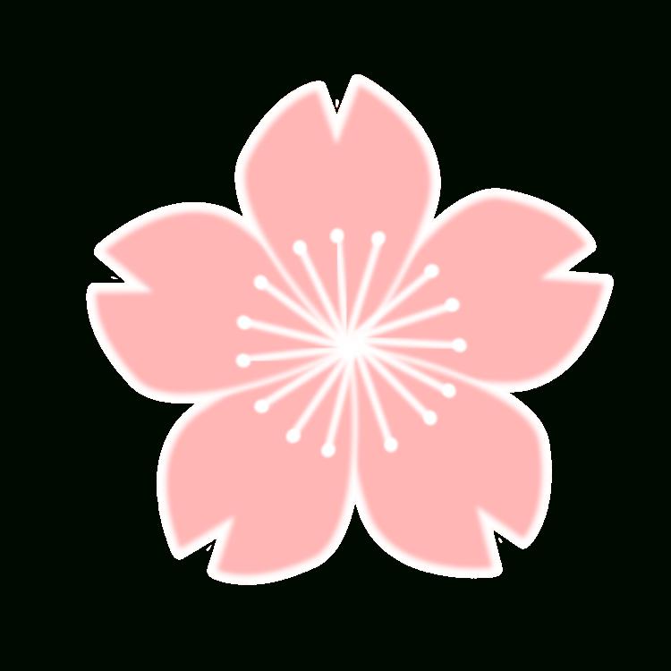 Sakura Flower Drawing