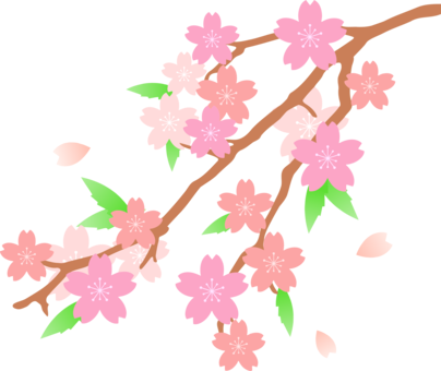 404x340 Cherry Blossom Drawing Flower Cc0