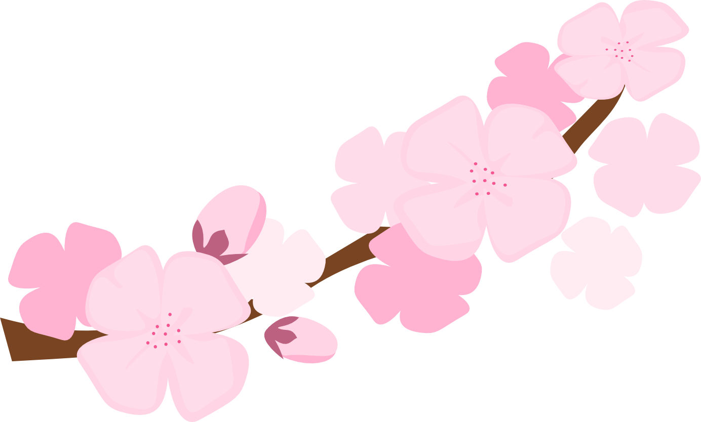 1384x834 Drawing Wallpapers Cherry Blossom Transparent Png Clipart Free