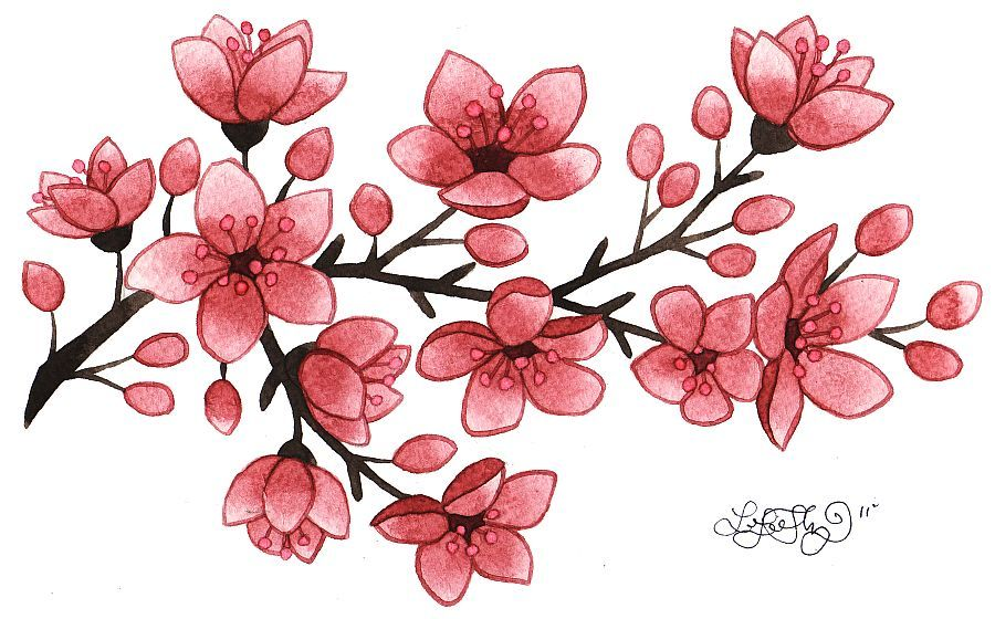 900x560 Huge Collection Of 'cherry Blossom Tattoo Drawing' Download More