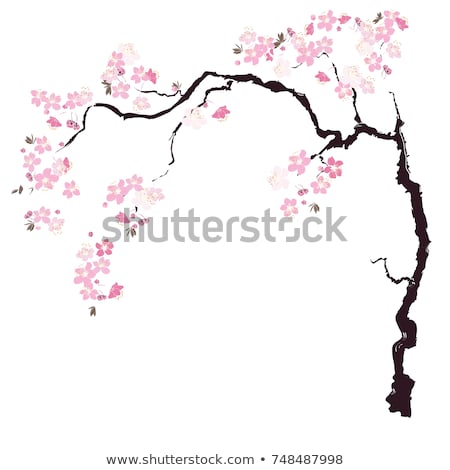 450x470 Huge Collection Of 'cherry Blossom Tree Branch Drawing' Download