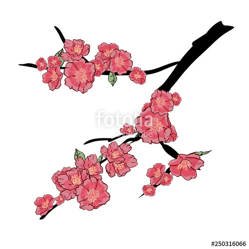 500x500 Sakura Japan Cherry Branch With Blooming Flowers Vector