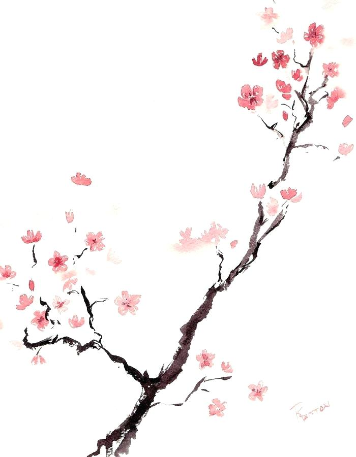 700x900 Draw Cherry Blossom How To Draw Cherry Blossoms Cherry Blossoms