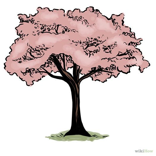 525x525 How To Draw A Cherry Blossom