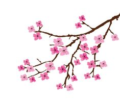 235x196 Best Cherry Blossom Vector Clipart Png Images Clipart Images