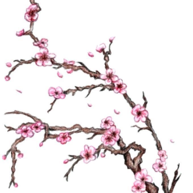 680x680 Sakura Trees Drawing