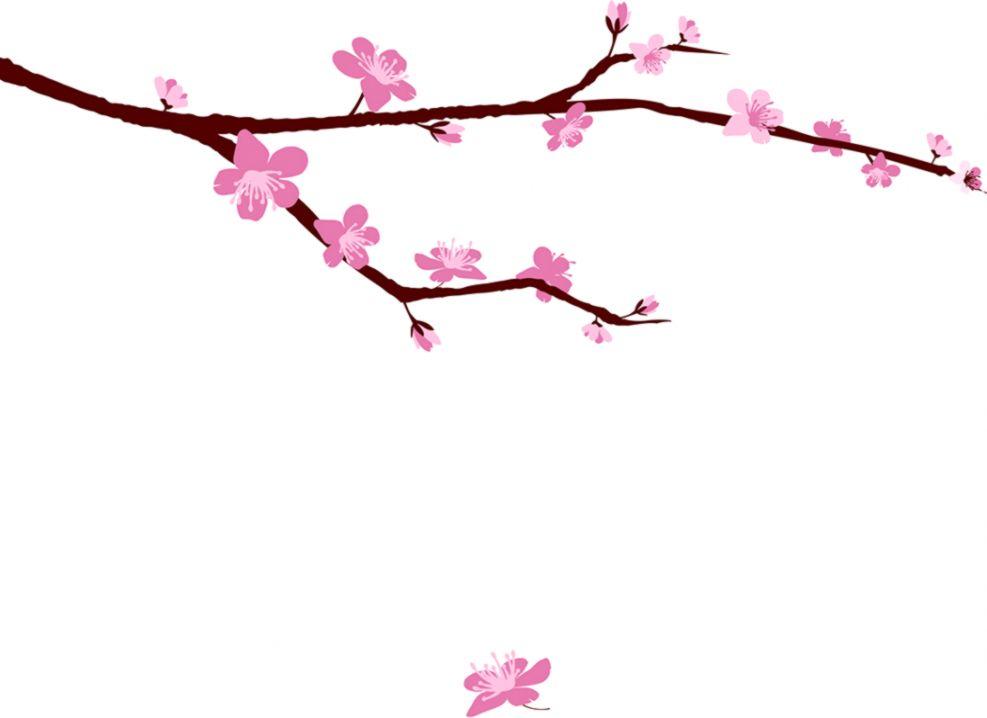 987x718 Cherry Blossom Tree Drawing Step