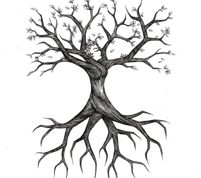 678x600 tree roots drawing tree roots sketch treesas tree decor for my