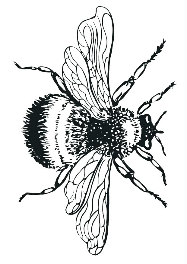 620x875 bumblebee drawings bumblebee search clip art illustration murals