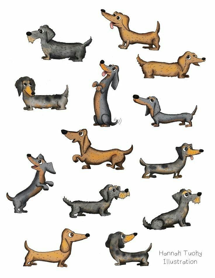 736x952 dachshunds doxies! dachshund, dachshund dog, weenie dogs