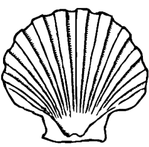 294x289 scallop shell template crafting shell drawing, scallop shells