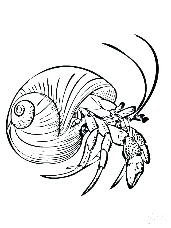 728x971 Eyeball Coloring Pages The Of Human Eye Coloring Pages Bulk Color