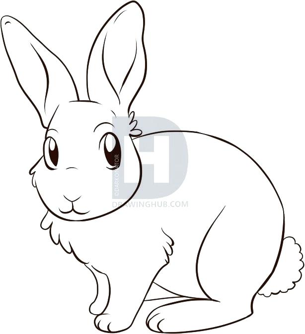 614x673 How To Draw Rabbit How To Draw A Rabbit Step Draw Rabbit Face