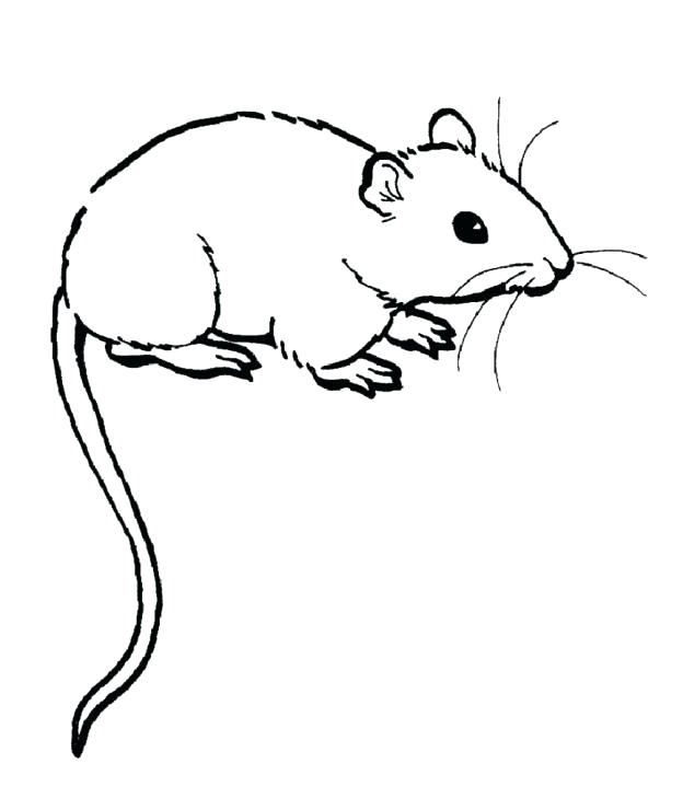 Scary Rat Drawing