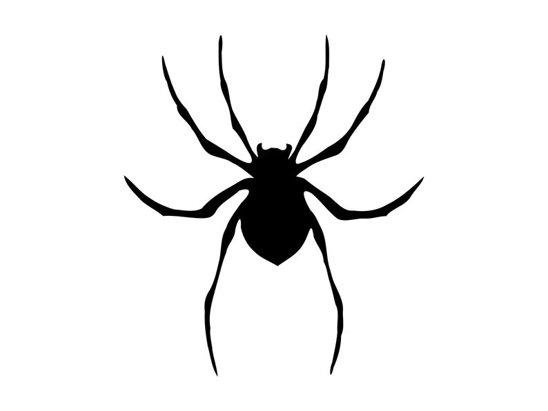 Scary Spider Drawing Free Download Best Scary Spider