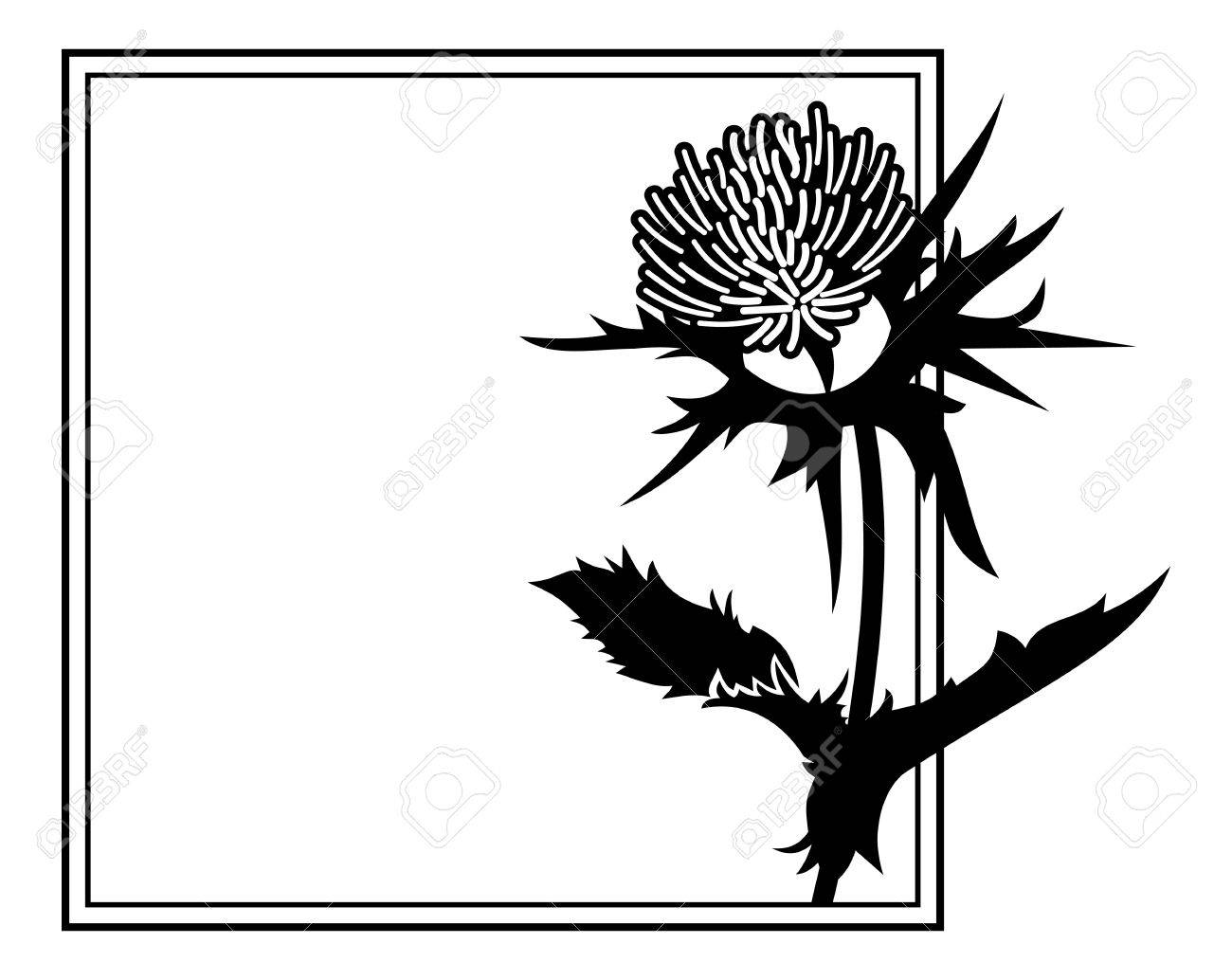 1300x1034 Huge Collection Of 'scottish Thistle Silhouette' Download More