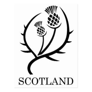307x307 Scottish Thistle Postcards Zazzle Ca