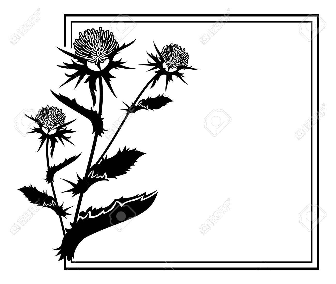 1300x1097 Thistle Clipart Illustration Clip Art