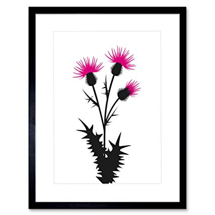 425x425 Painting Illustration Drawing Thistle Flower Scotland