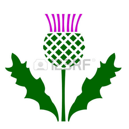 450x450 Thistle Pictures Clip Art Clipart Collection