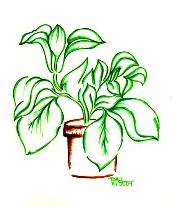 592x700 draw your plants challenge! plants amino amino