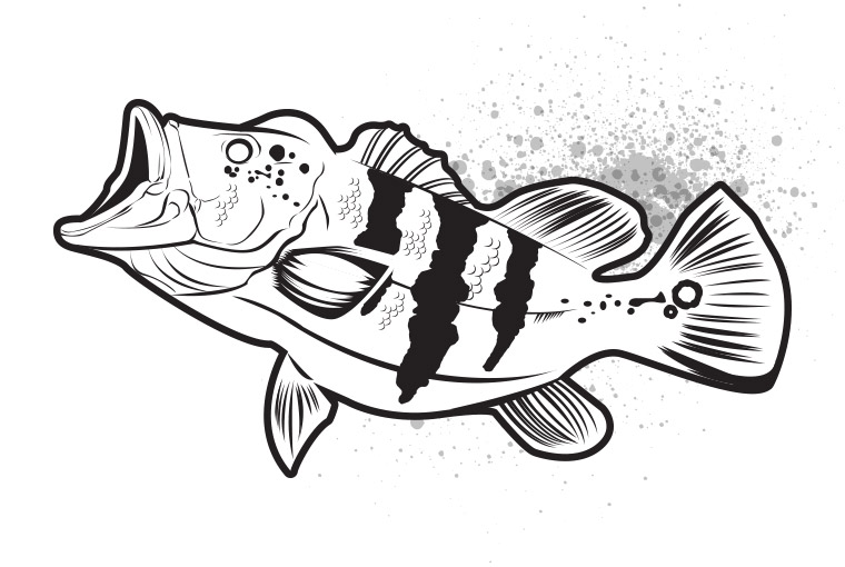 760x510 bass drawing peacock bass for free download