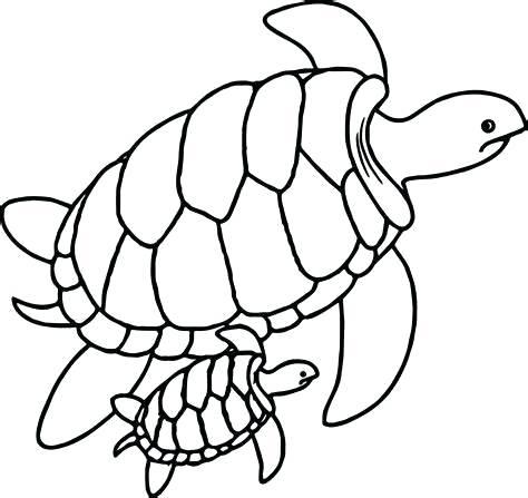 474x447 sea turtle outline sea turtle drawing easy sea turtle outline