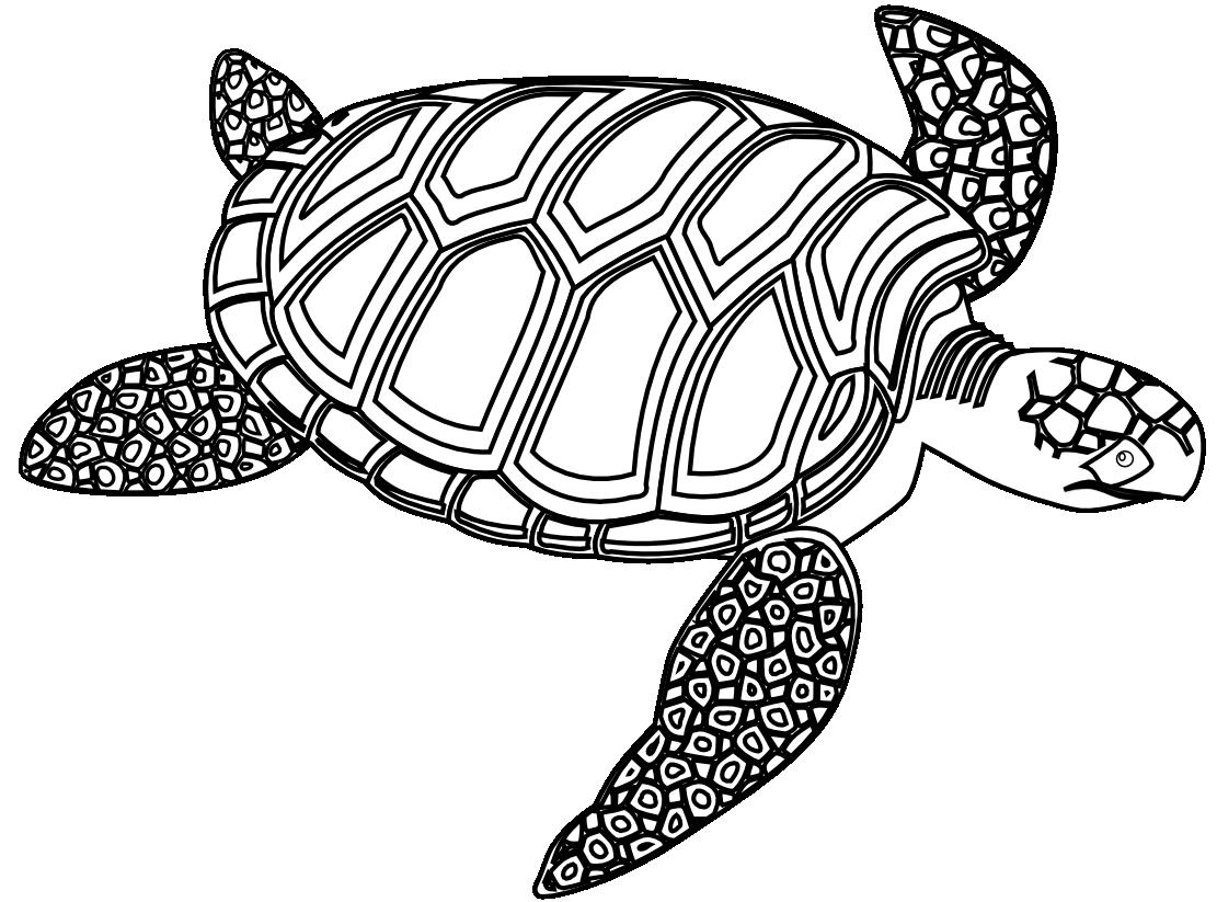 1111x823 Hawaiian Turtle Color Clipart