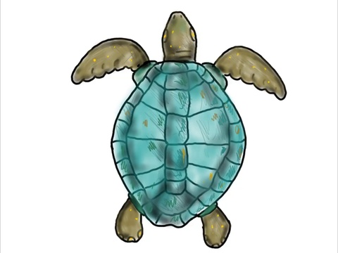 480x360 Ridley Sea Turtle Swimming Color Drawing Animation Footage