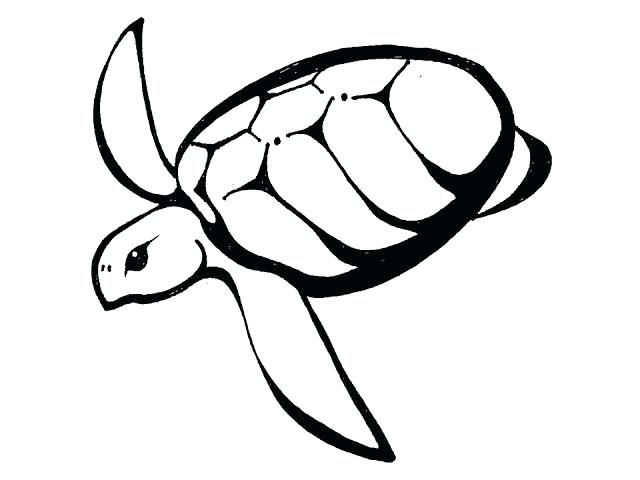 640x480 Simple Turtle Drawings Simple Sea Turtle Drawings