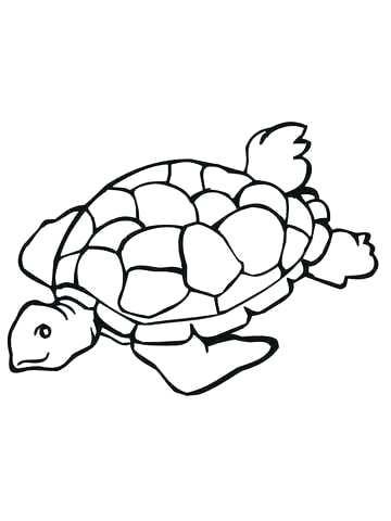 360x480 Turtle Color