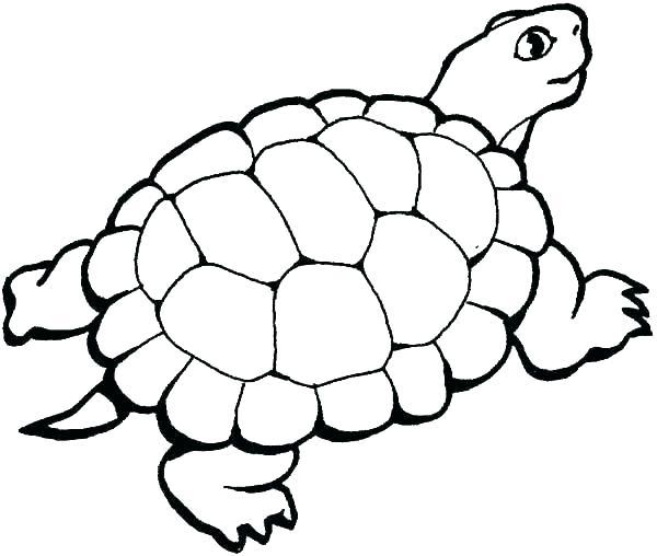 600x508 Turtle Color