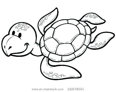 450x358 Baby Turtle Drawing