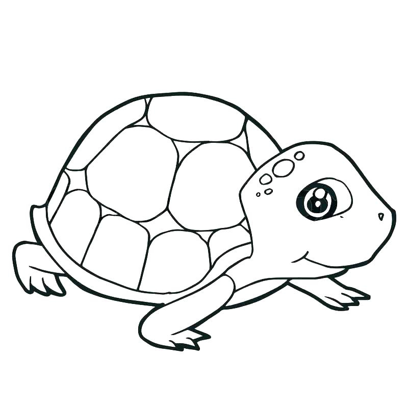 800x800 coloring book turtle turtles coloring book coloring pages
