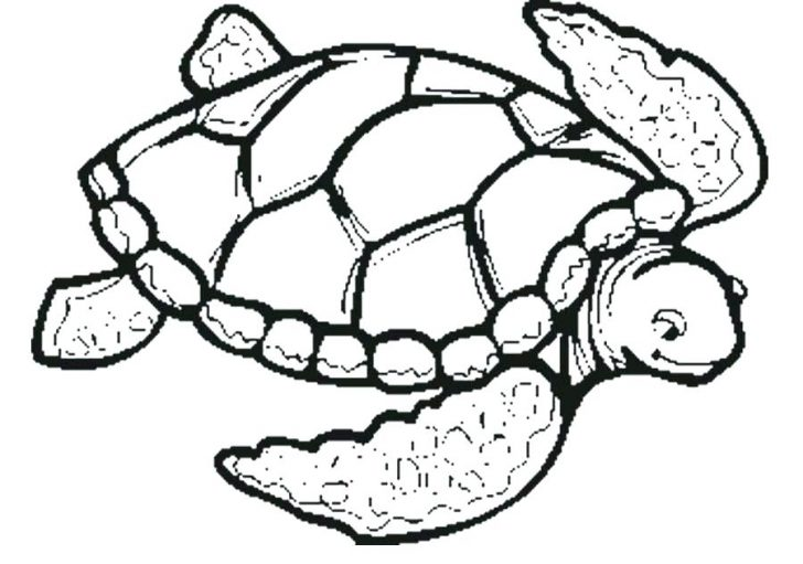 728x511 Coloring Pages Online For Free Disney Unblocked Adults Sea Turtle
