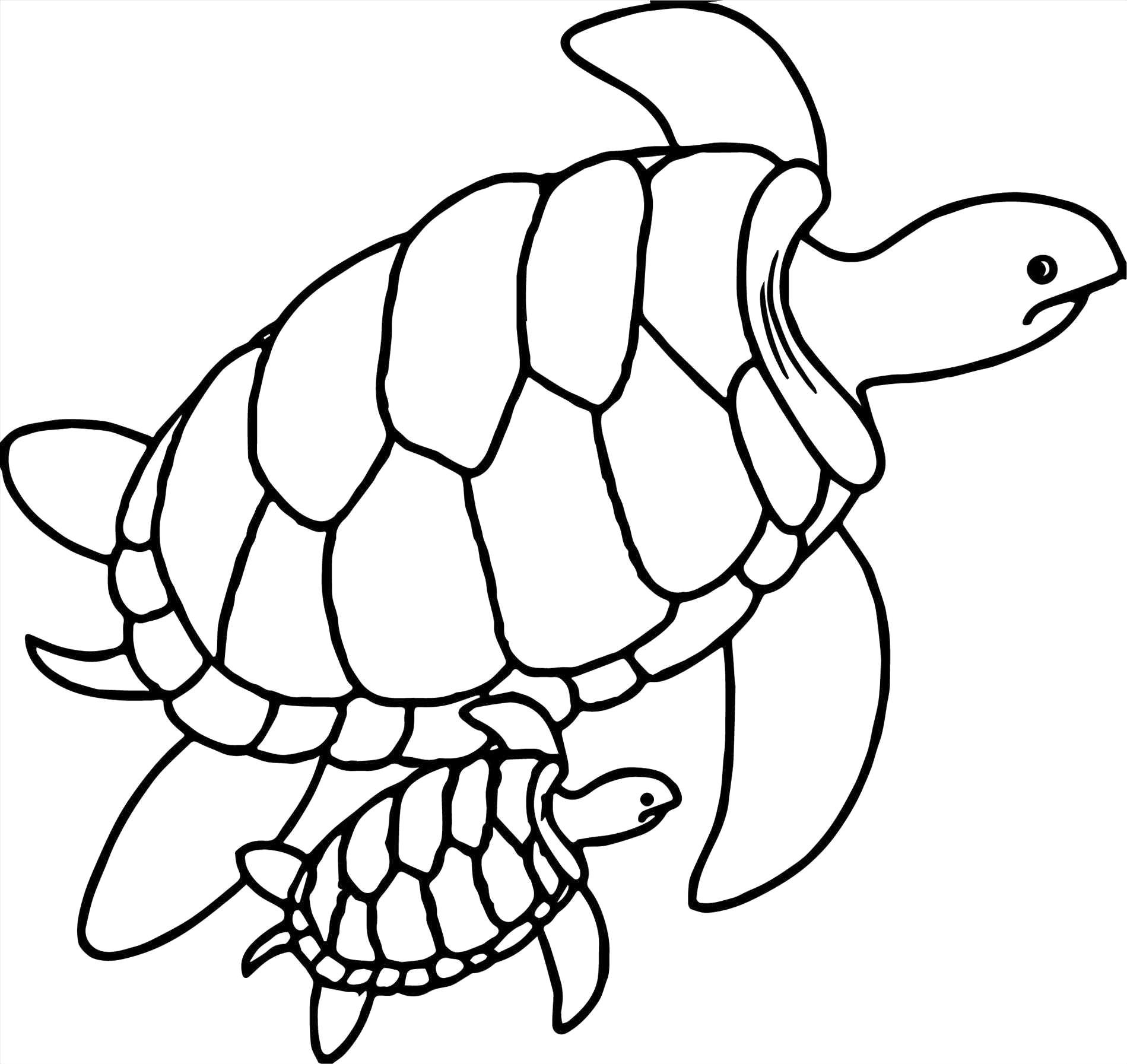 1899x1793 Sea Turtles Drawing Cute Turtle