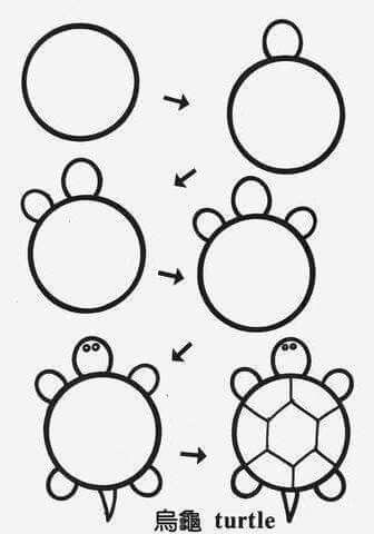 336x480 Draw Turtle Circle Stey