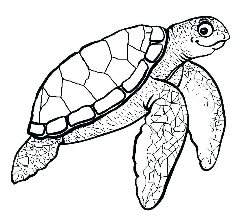 850x761 Draw Sea Turtle
