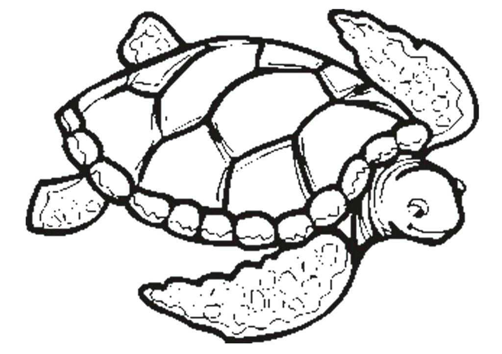 1024x723 drawing of a sea turtle draw sea turtle pencil drawing sea