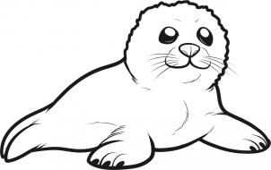 302x190 how to draw a seal pup, seal pup step grade seal pup