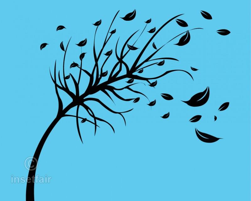 800x640 Autumn Season Tree Drawing